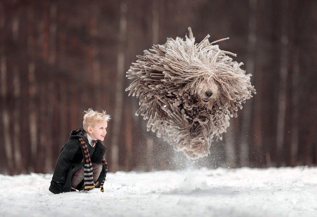 komondor corriendo junto a un niño