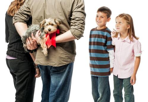padres regalando yorkshire terrier a sus hijos