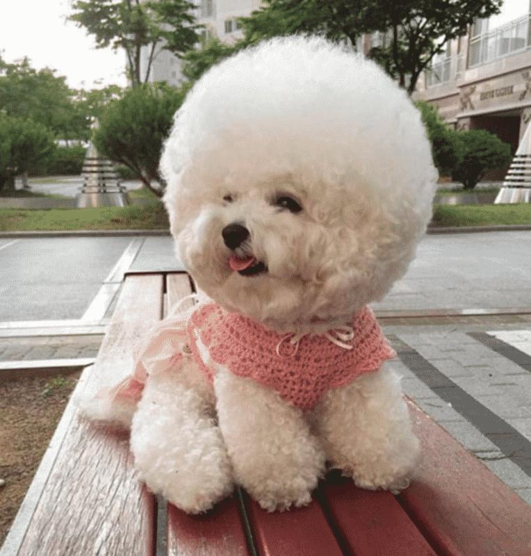 perro blanco pequeño sobre una banca de madera