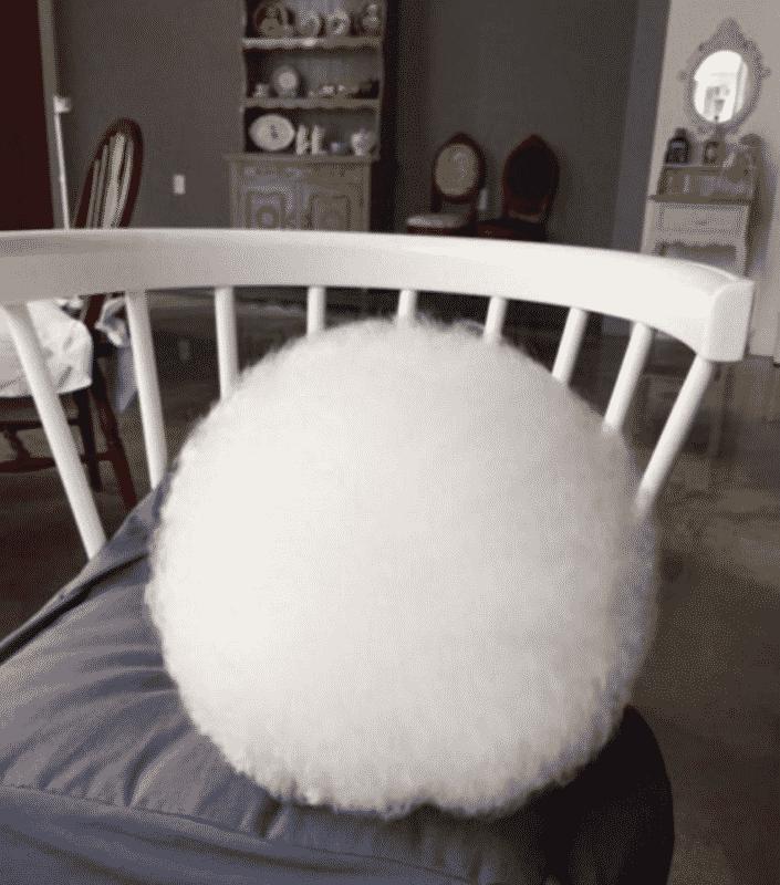perro blanco y pequeño descansando sobre una silla