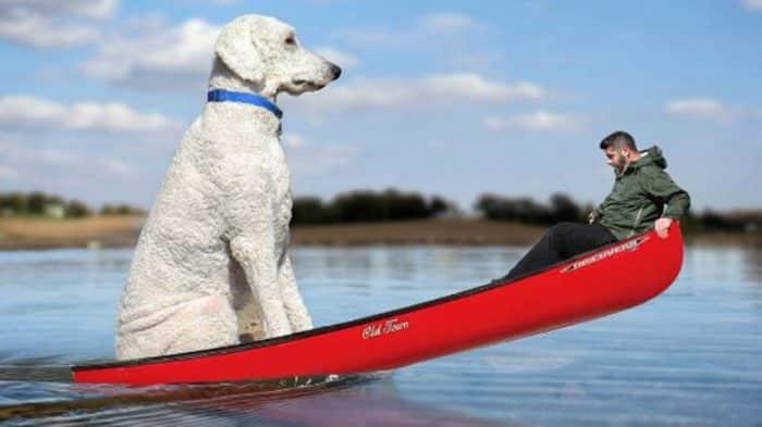 perro gigante en kayak junto a hombre joven