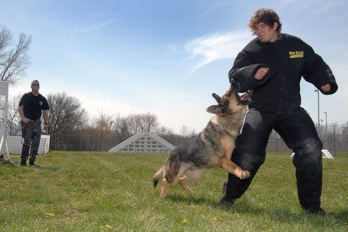 perro policía atacando a un supuesto malhechor