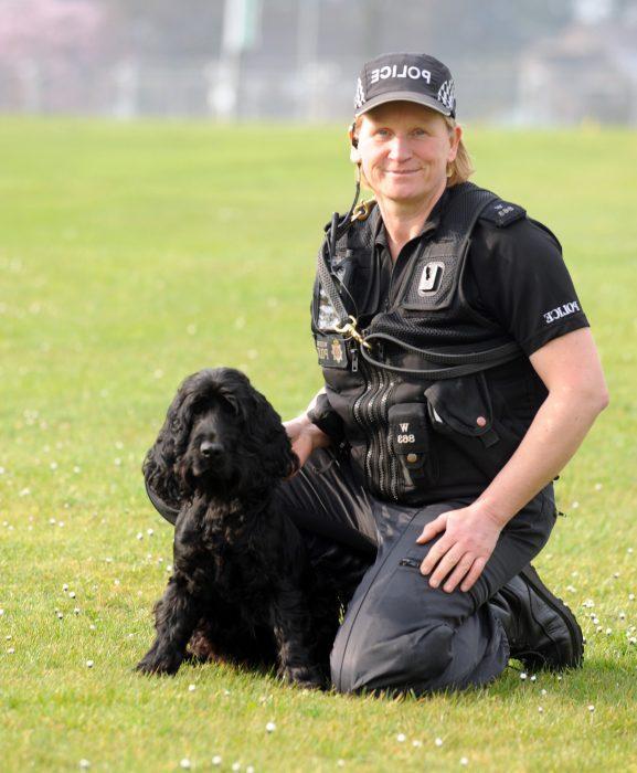 perro policía cocker spaniel