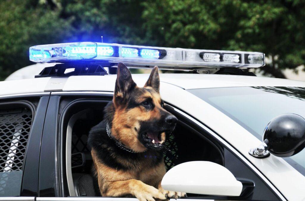 perro policía en un coche policial