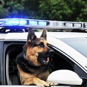Razas de perros policia