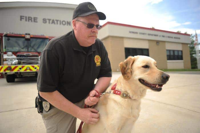 perro policía labrador retriever