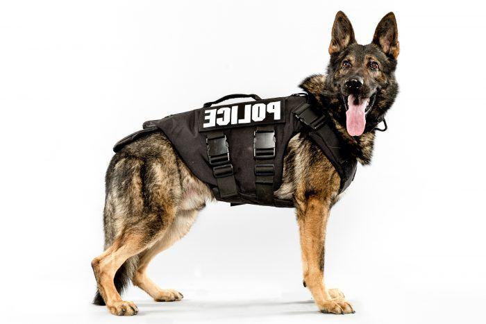 perro policía pastor alemán