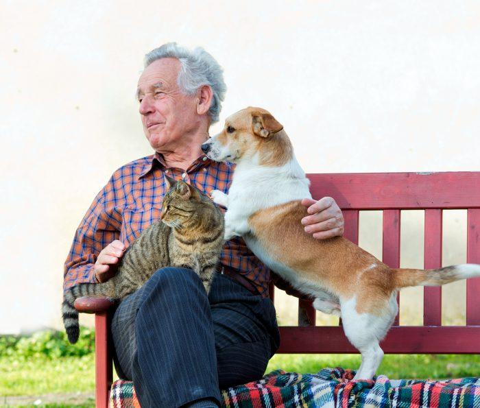 perro y gato junto a hombre mayor anciano