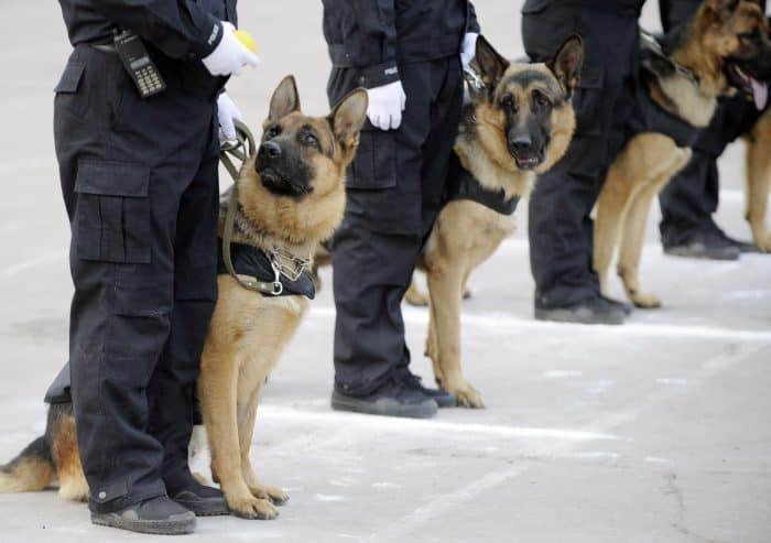 perros policias de control de orden público o de intervención