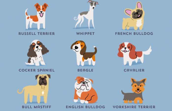 que tener en cuenta al elegir una raza de perro ingles