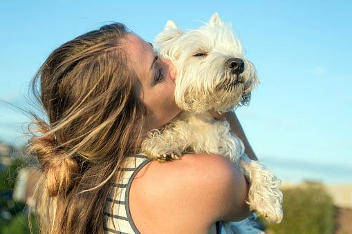 westie west highland white terrier disfrutando el sol y el abrazo de su ama