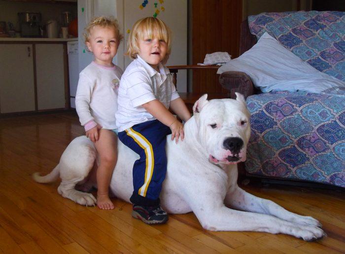 2 niños arriba de un dogo argentino
