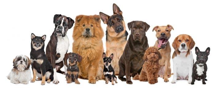 12 perros de distinta raza y tamaño