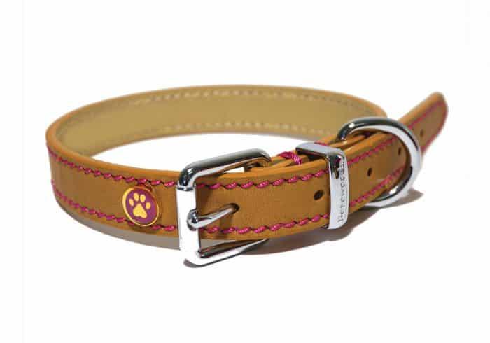 collar estándar para perros