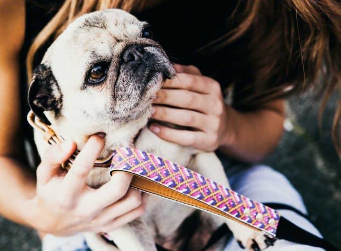 cómo elegir el mejor collar para un perro