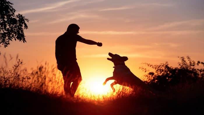 silueta de un perro jugando con su amo al atardecer