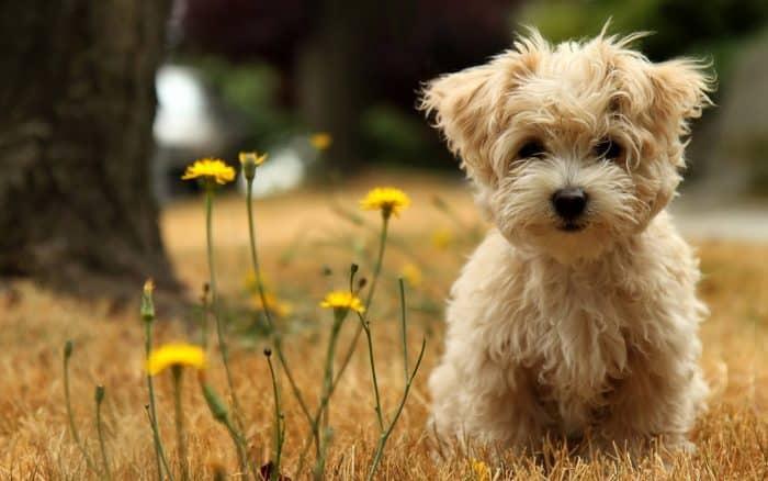 razas de perros mas bonitas