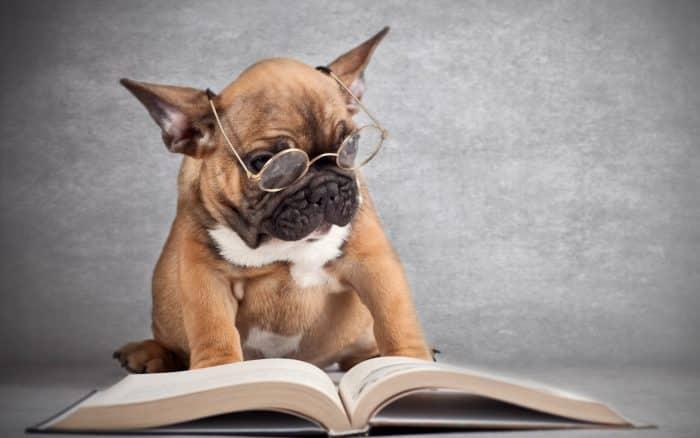 razas de perros más inteligentes