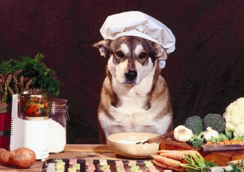 alimentos caseros para perros