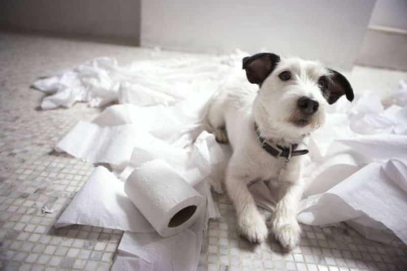 comida para perros que tienen diarrea
