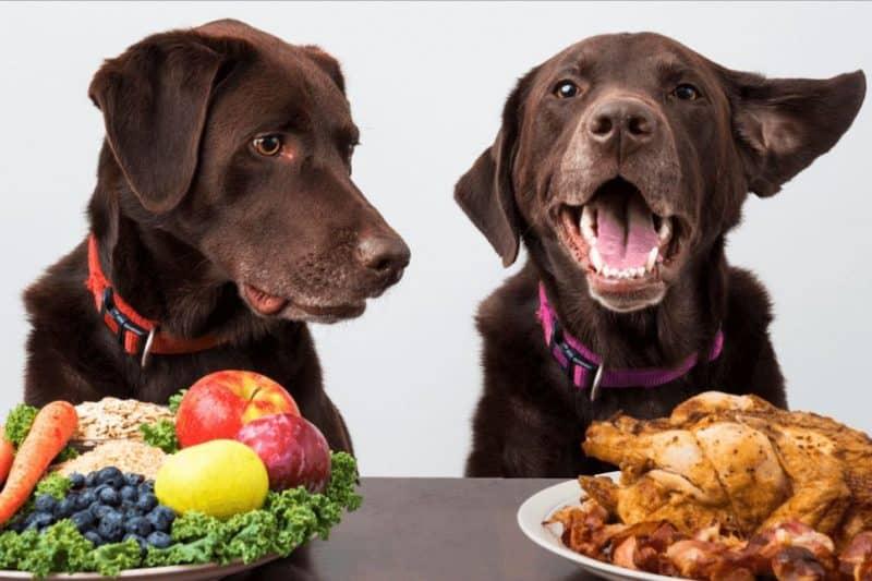 como saber cual es el mejor alimento para mi perro