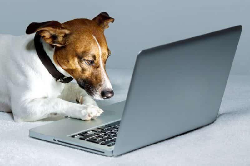 por que comprar comida para perros por internet