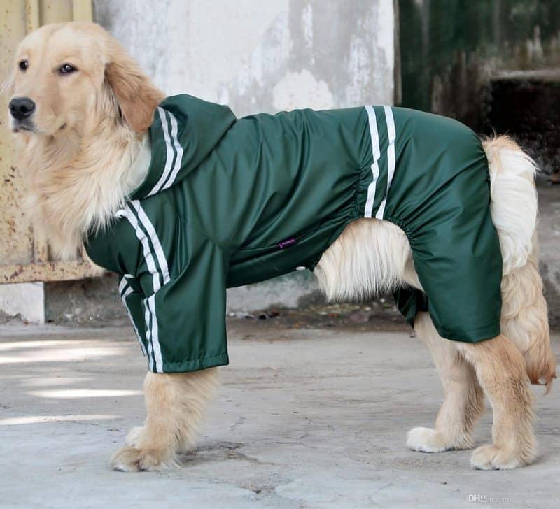 abrigos impermeables para perros