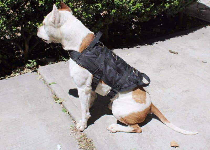 abrigos tipo chaleco para perros
