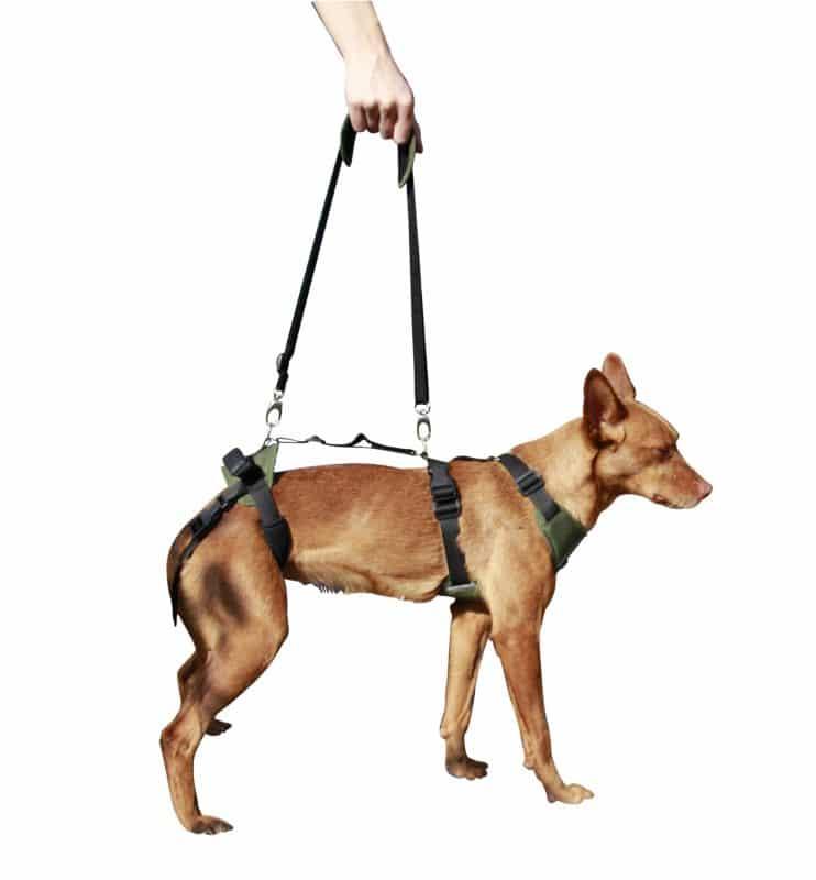arnes de apoyo asistido para perros