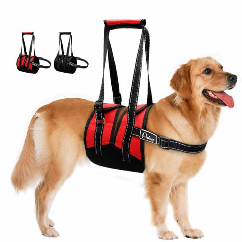 arnes para perros de apoyo asistido acolchado