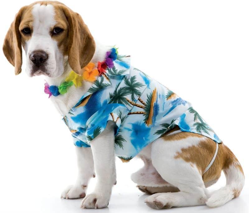 camisetas estilo hawaiano para perros