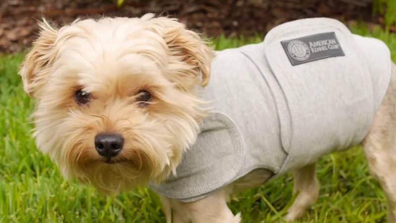 camisetas para la ansiedad para perros