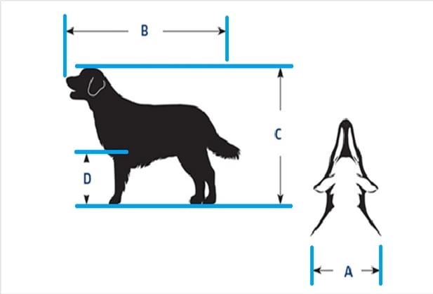 cómo medir a tu perro