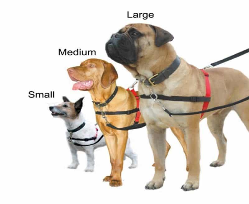 comprar un arnés para perros