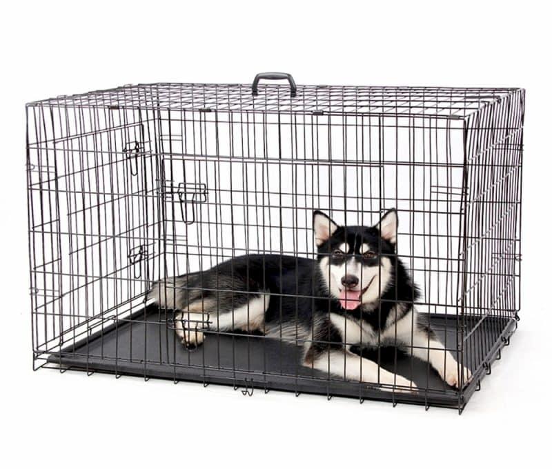 consejos para acondicionar una jaula para perros