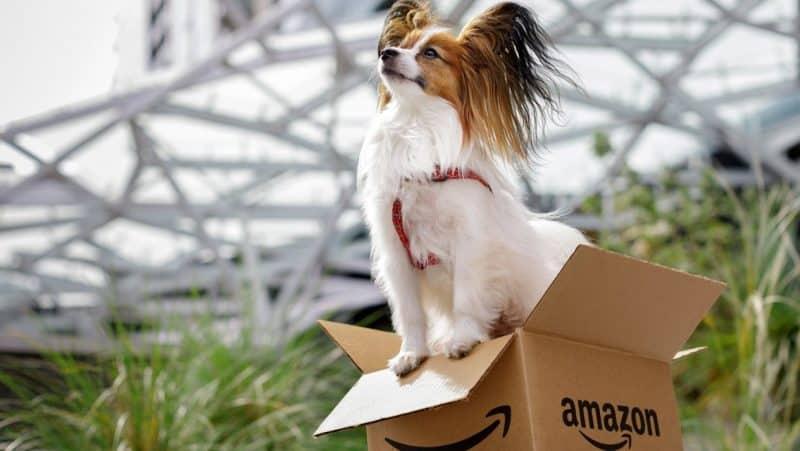 curiosidades del perro papillon o continental toy spaniel
