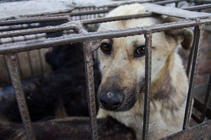 desventajas de las jaulas para perros