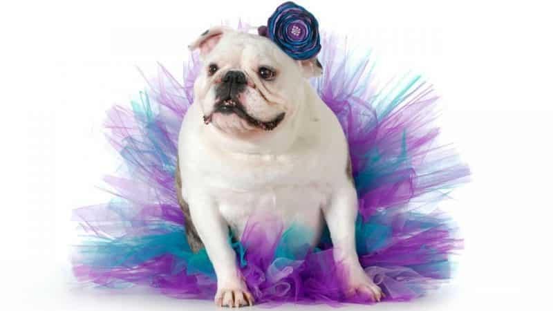 disfraz de bailarina para perros