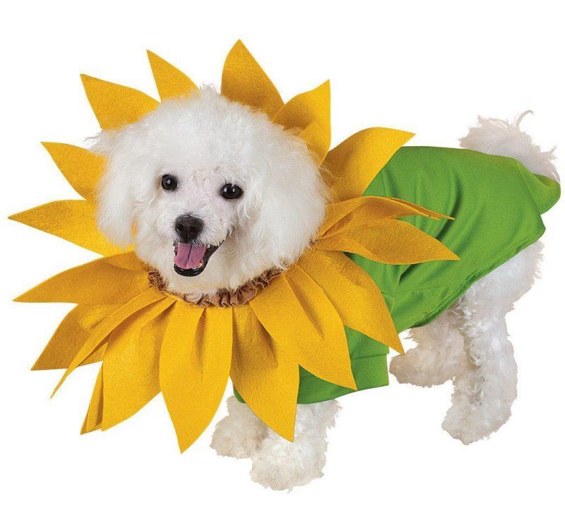 disfraz de flor para perros