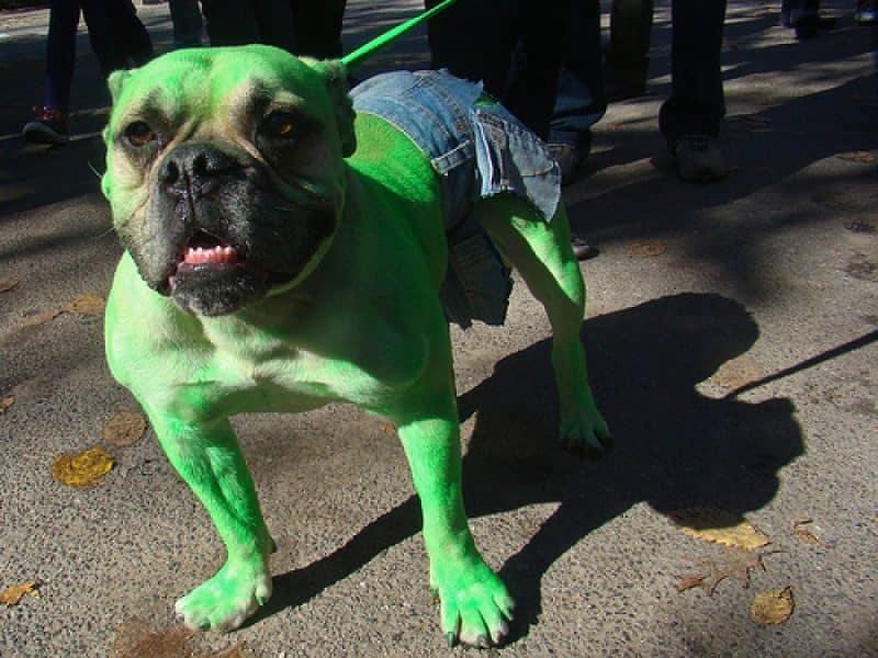 disfraz de hulk para perros