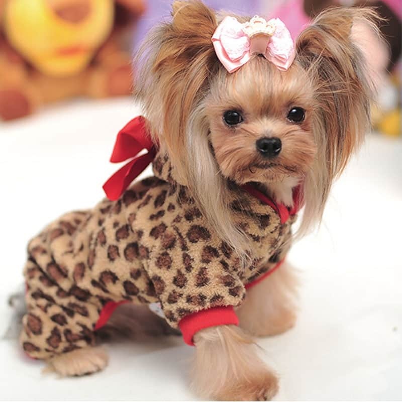 disfraz de leopardo para perros