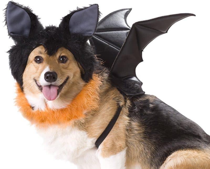 disfraz de murciélago para perros