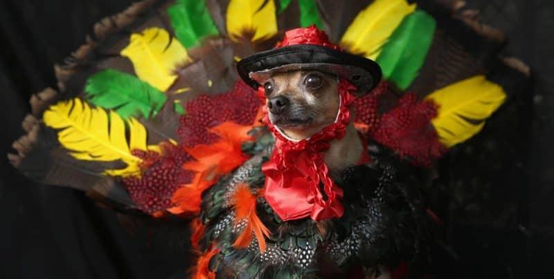 disfraz de pavo real para perros