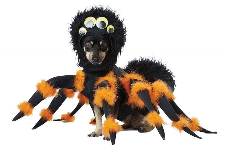 disfraz para perros araña