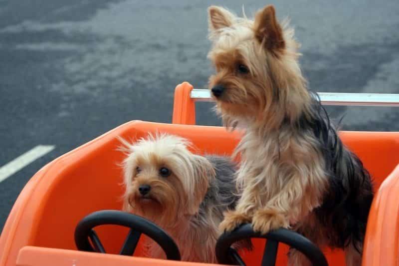 disfrutas el paseo con seguridad en un remolque para perros