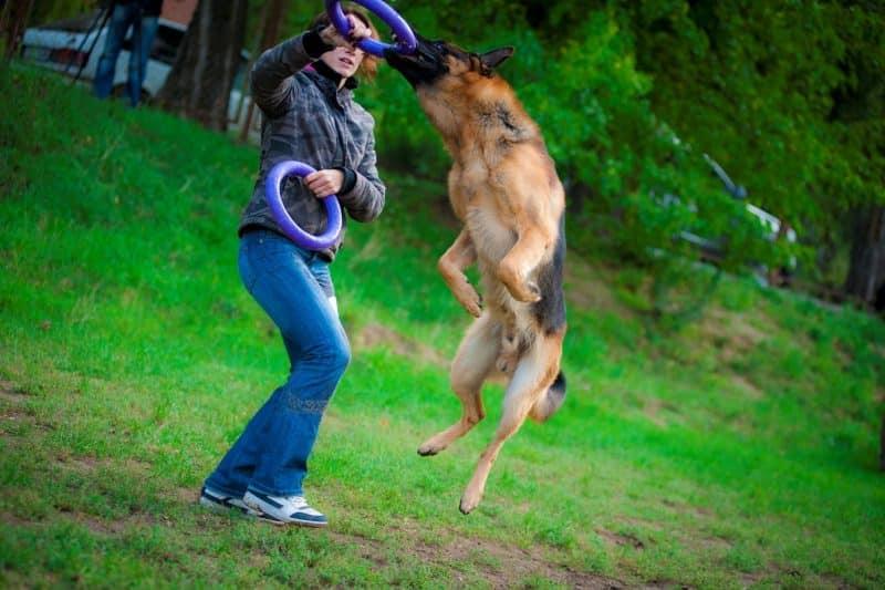 los juguetes ayudan a favorecer el entrenamiento de un perro