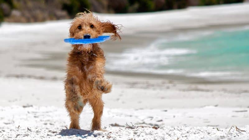 frisbees de goma para perros