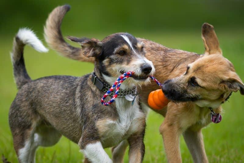 juguetes de búsqueda para perros