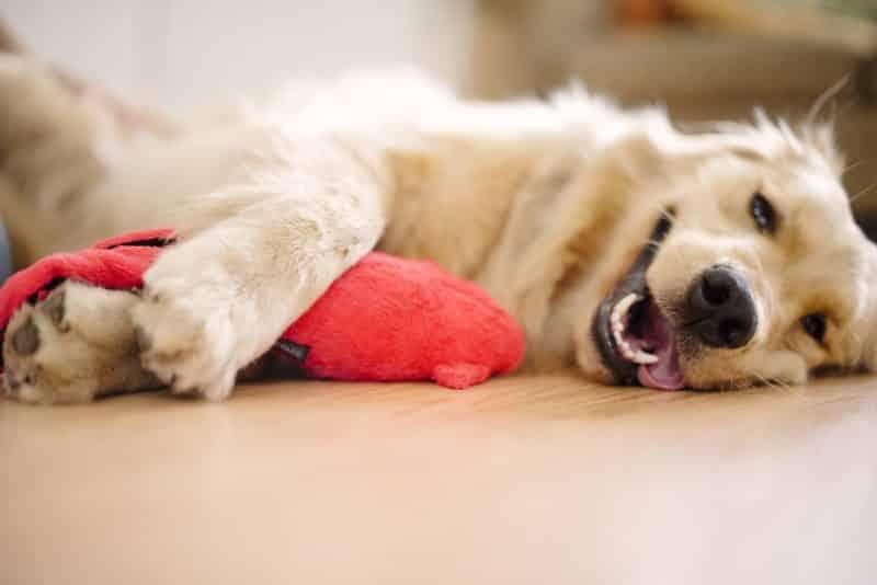 juguetes de peluche pelotas y cuerda para perros