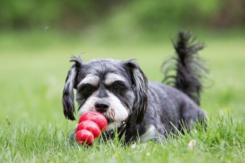 mordedor kong para perros